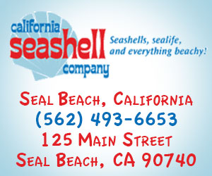 Ad_California-Seashell-Co.jpg